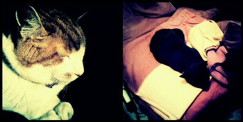 cross process cats