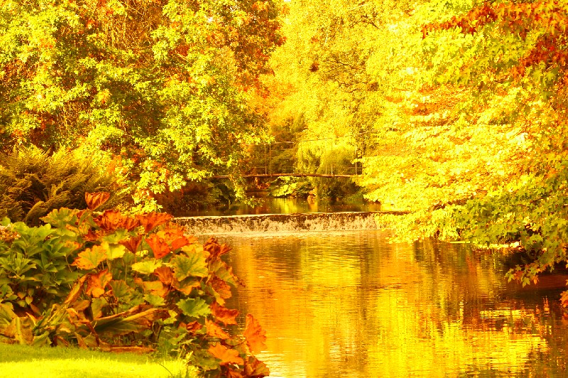 Autumn at Mount Usher Gardens, County Wicklow, Ireland by rosewoodoil