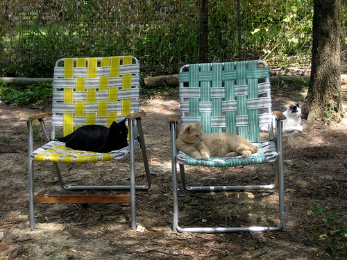 cute rescued cats resting on chairs goathouse refuge cage free