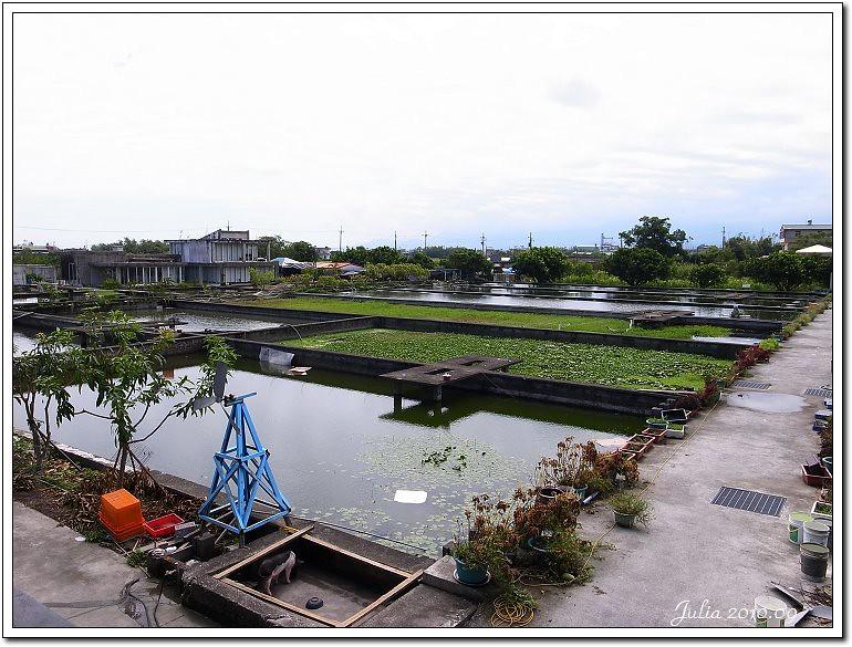 勝洋水草 (4)
