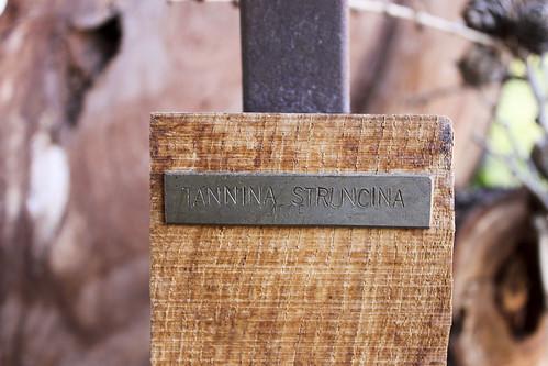 Tannina Struncina