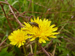 Moscow Fly (Daniele Sala Photography) Tags: life flowers italy plants dog blur flower macro verde green dogs nature forest photoshop butterfly garden insect lumix zoo flickr zoom dragonfly moscow snail insects bio natura panasonic bee biology mosca botanica wwf farfalla primopiano insetto foreground giardino nationalgeographic insetti biologia macrophotography veneto cavalletta coccinella macrofotografia macroinsect macro11 macroshots microlife panasoniclumix macroinsects macronature hedgedog cs5 macroinsetti macronatura dmctz10 dmczs7 micronatura macroinsetto scaligero70