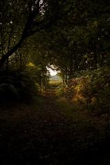 Woodland Path (Future-Echoes) Tags: wood trees light shadow leaves woodland dark evening path heather shade essex tiptree