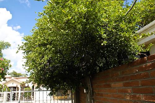 My garden 0077 September 24, 2010