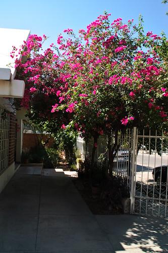 My garden 0084 October 05, 2010