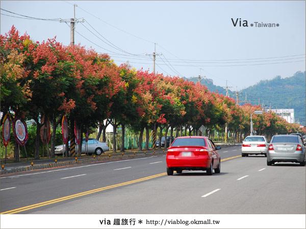 【台中】台灣秋天最美的街道!台中大坑發現美麗的台灣欒樹8