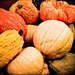 263/365: Pumpkins Galore