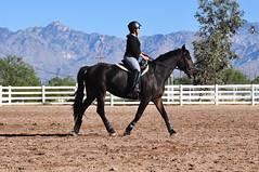 DSC_8671 (netg15) Tags: horses bella andalusian friesian warlander xtexanne