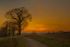 The Oak in the last light (desimage) Tags: winter light sunset tree english oak dusk country des kings lane langley herts chipperfield kingslangley mywinners flickrdiamond theunforgettablepictures natureselegantshots desimage coth5 desgould galleryoffantasticshots kurtpeiserexcellence