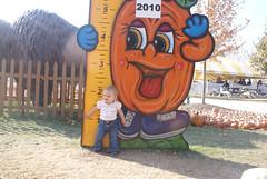 Lilah (Didier Farms, 2010)