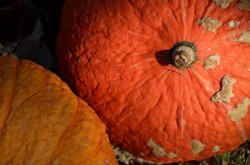 Orange and warts