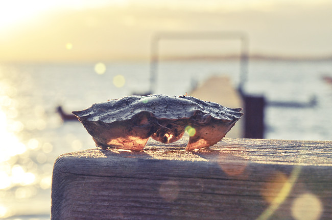 krabbskal