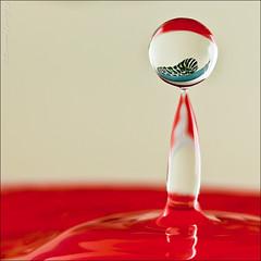 _DSC2886 (Lino Sgaravizzi ) Tags: macro water drops nikon natura waterdrops acqua rosso riflesso goccia macaone d3x mygearandmepremium mygearandmebronze mygearandmesilver mygearandmegold