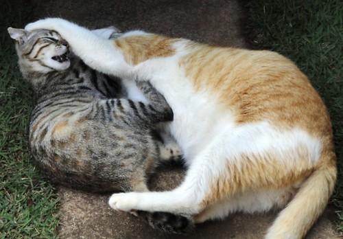 """""""Me larga!"""""""