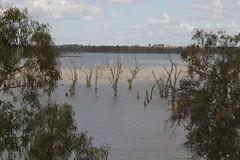 View from Kingston Bridge (eyesofmark) Tags: wetlands southaustralia murrayriver riverland barmera lakebonney