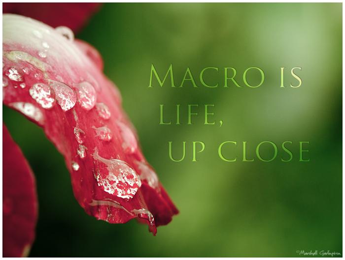 Macro is