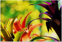 flowers and bokeh (blmiers2) Tags: flowers orange usa newyork flower green nature fleur yellow geotagged flora nikon purple bokeh flor gift florets flowerbokeh d40x bokehgreen fleue bokehflower bokehyellow friendshipsgarden blm18 blmiers2