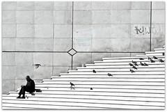 Les escaliers (Incordionista) Tags: paris blanco pigeon palomas blanc espera hombre escaleras homme ladfense attend ladefensa ecaliers