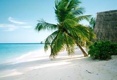 MALEDIVEN - LUX Maldives (old name was White Sands / and Diva Maldives) Ari Atoll (Maldives -nice palm- Indian Ocean) (Rasmus Ortmann) Tags: ocean 2001 travel white beach beautiful weather strand germany wonder island nice december indian name dream palm resort insel sands dezember maldives alter diva spa isle palme kiel ari wetter rasmus reise atoll malediven ozean insular wunder taum indischer ortmann