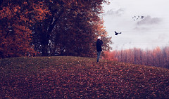 you were my home   (explored #123) (londonscene) Tags: autumn cloud bird fall hat leaves forest flying hill sailor