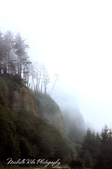 Misty Trees, Gold Bluffs Beach (Michellekiba) Tags: park panorama creek state sonoma roadtrip mendocino redwood prairie fortbragg californiacoast lostcoast hiway1 compositephotos californiaphotographer womeninphotography michellekibaphotography canond50user
