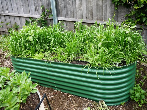 Green Manure Before
