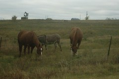 horses and a donkey near hagerman