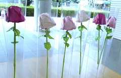 13-Nov-2010 Floating roses made by the students (1) (The Gift of Gifts) Tags: happiness thankful grateful kindness valentinesday sincerity paperrose diamondrose origamirose  artrose rosasdepapel  livrerose  papierrose giftofgifts giyhng giftofgift giftofgiftsrose  piparardaigh roseenpapier papierstieg papprrose   paprovre thegiftofgiftsrose thegiftofgiftrose beautyandthebeastrose thegiftofgifts gg papierrosen    rosedicarta  kertasmawar katgller  papirrua paprrzsa  letrrose raamatrose piparrose    cartearose rose karatasirose papperrose papurrose giftofgiftsrosehotmailcom