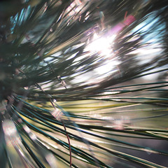 into the light (fotobananas) Tags: park light sun macro pine pen olympus explore ep1 calderstonespark calderstones explored fotobananas
