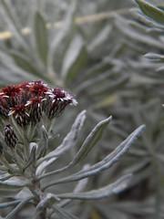 Flores-vegetacin (Mr. Kuminev) Tags: costa de la nikon selva rica muerte cerro coolpix l100