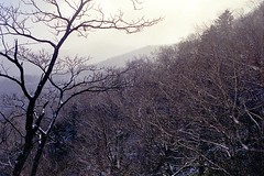 Under the snow cloud (threepinner) Tags: auto snow cinema north negative  ricoh hokkaidou rikenon hidaka northernjapan xr500 mountainsnaps  mtpekerebetsu