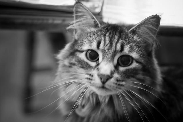 {322/365} cat