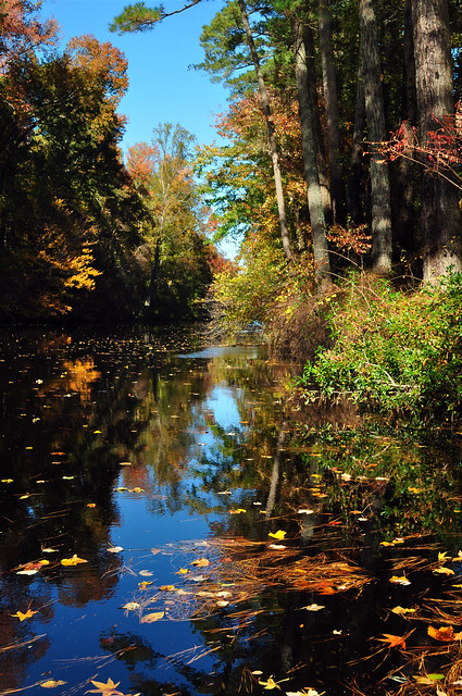 Dismal Swamp Canal Nov. 2010