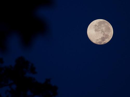Full Moon at Pench
