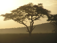 Dusk (life outside the fish bowl) Tags: africa travel light sunset sky brown sun sunlight colour tree beautiful tanzania evening skies desert dusk serengeti darrenfarmer lifeoutsidethefishbowl