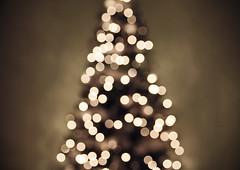 Christmas tree lights II (Shandi-lee) Tags: christmas white holiday green festive lights soft bokeh christmastree christmaslights neutral