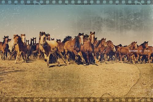pioneer woman stampede