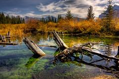 The end (JoLoLog) Tags: trees canada mountains fall day cloudy fallcolors alberta hdr banffnationalpark lorien canadianrockies vermilionlakes therockymountains canonxsi dblringexcellence tplringexcellence eltringexcellence