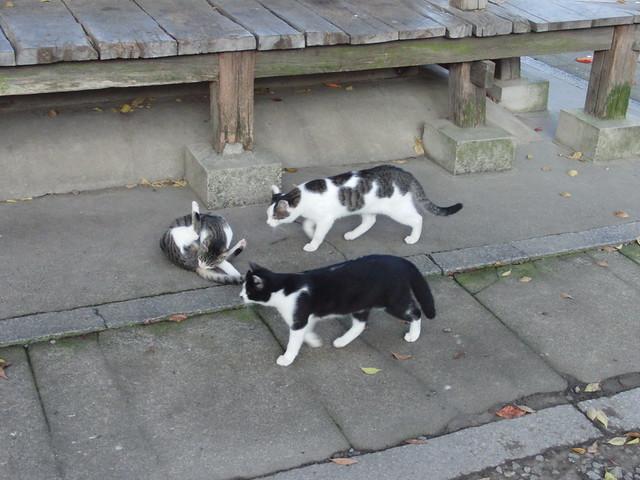 Today's Cat@2010-11-23