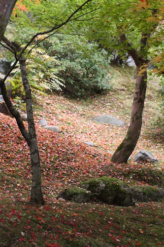 晩秋の庭 / The garden in autumn