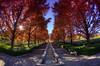 Fall in Japan (/\ltus) Tags: autumn fall japan pentax handheld hdr k7 5xp southernjapanalps