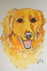 Day 8 - Golden Retriever