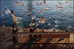 November 25th (oscarinn) Tags: barcelona november espaa beach birds feeding streetphotography days gaviotas laramblademar