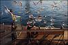November 25th (oscarinn) Tags: barcelona november españa beach birds feeding streetphotography days gaviotas laramblademar