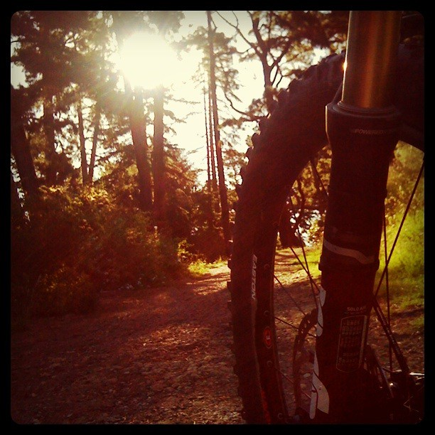 Sun getting low - climbing up through the Warringal pines