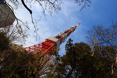 Tokyo Tower (StephanExposE) Tags: japon japan asia asie stephanexpose cherrytree arbre nature city ville tree tokyo tokyotower tower tour ciel sky