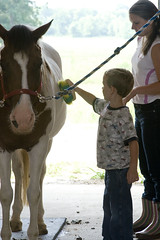 Will grooms Spirit (Montgomery Area Nontraditional Equestrians (MANE)) Tags: al mane pikeroad