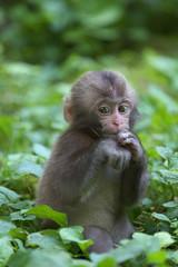 What? (Masashi Mochida) Tags: baby monkey okayama naturesfinest supershot kanba abigfave impressedbeauty newacademy rubyphotographer alittlebeauty