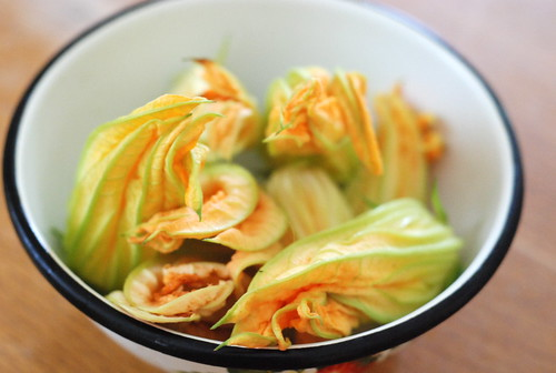 suvikõrvitsaõied/zucchini flowers