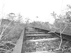 Estrada de Ferro (Ricardo Silva - Registro/SP) Tags: do vale ricardo fujifilm paulo so ribeira silva processos s1800 registrosp gerenciais unisepe